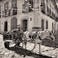 Horse and Cart, Paraty Brazil